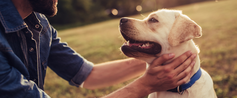 How to Care for your Dog's Skin this Summer