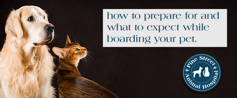 How to prepare for and what to expect while boarding your pet.....