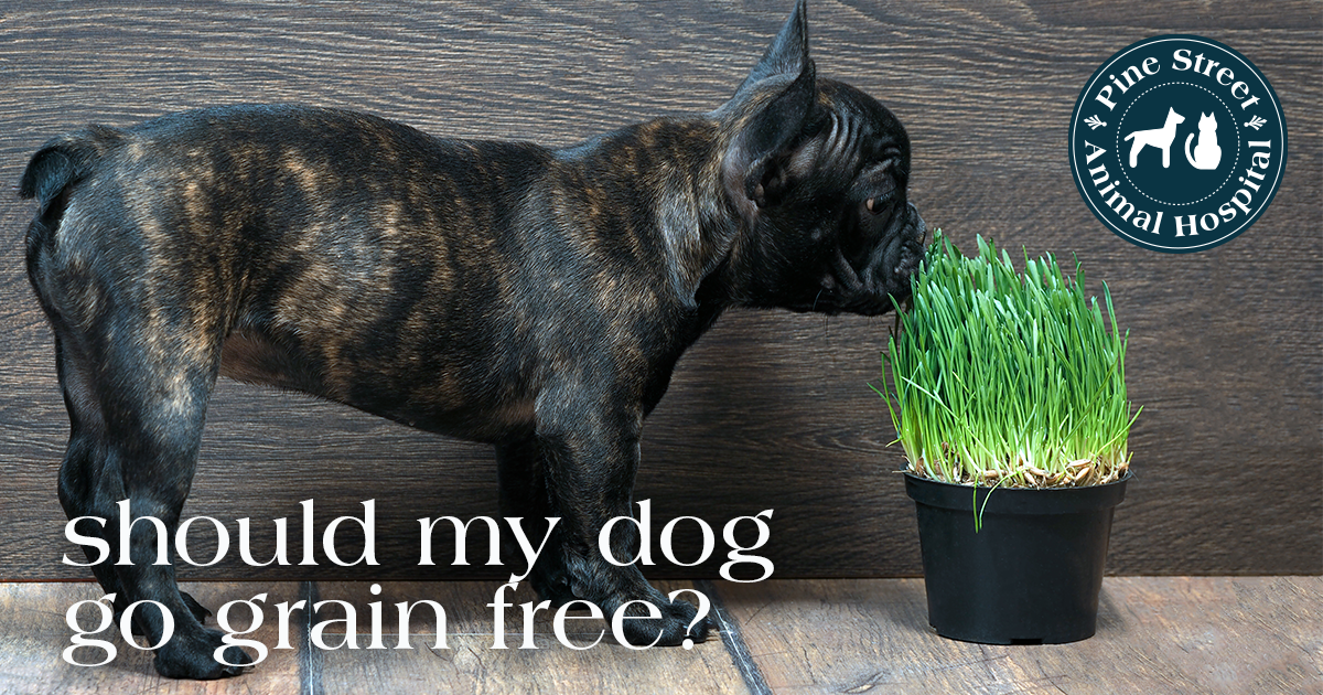 Does my pet need grain-free food?